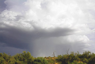 A rain shaft descends from a Thunderstorm over the open Desert